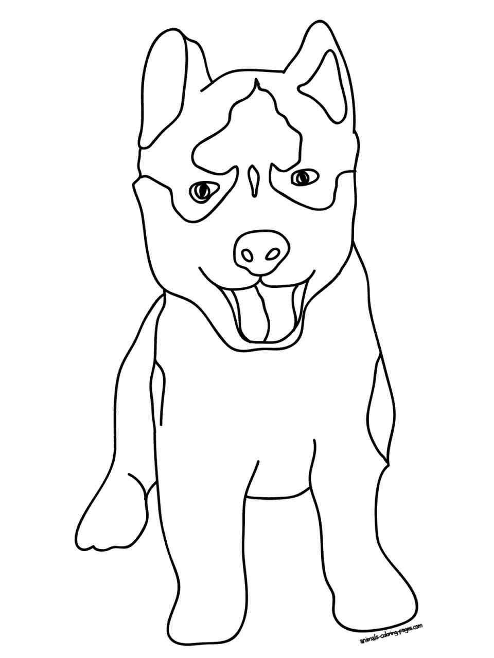 Pitbull Puppies Coloring Pages