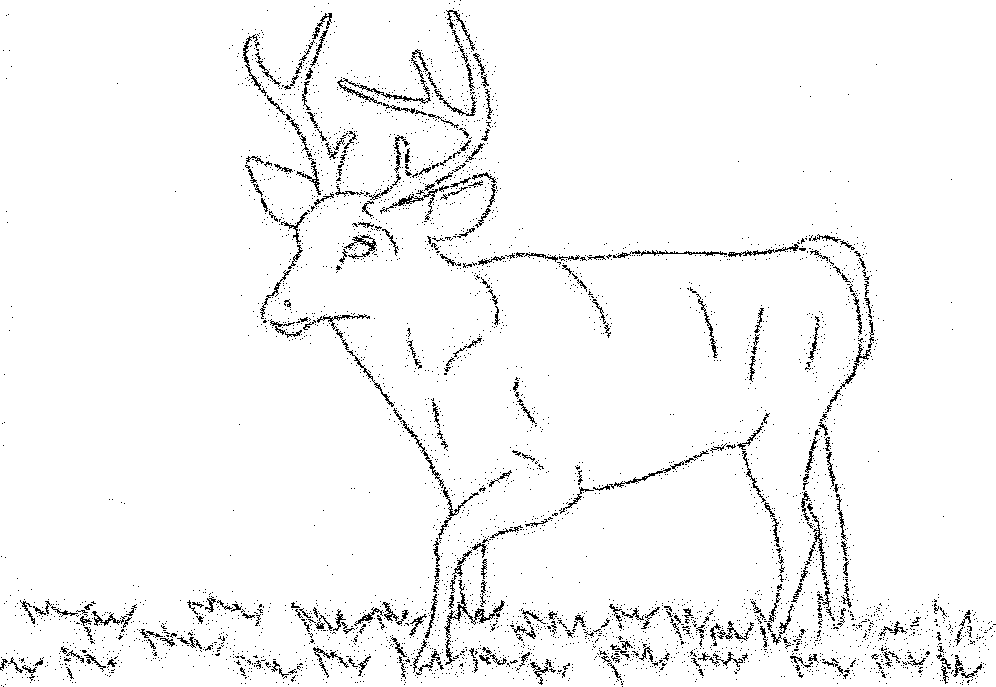 White Tailed Deer Coloring Pages To Print - Coloring Home