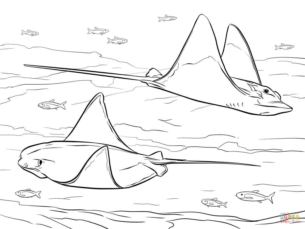 Sting ray coloring page
