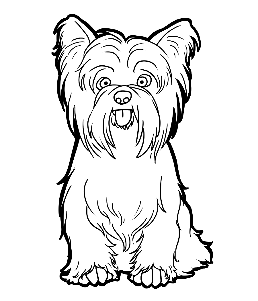 Yorkshire Terrier Coloring Page - Coloring Home