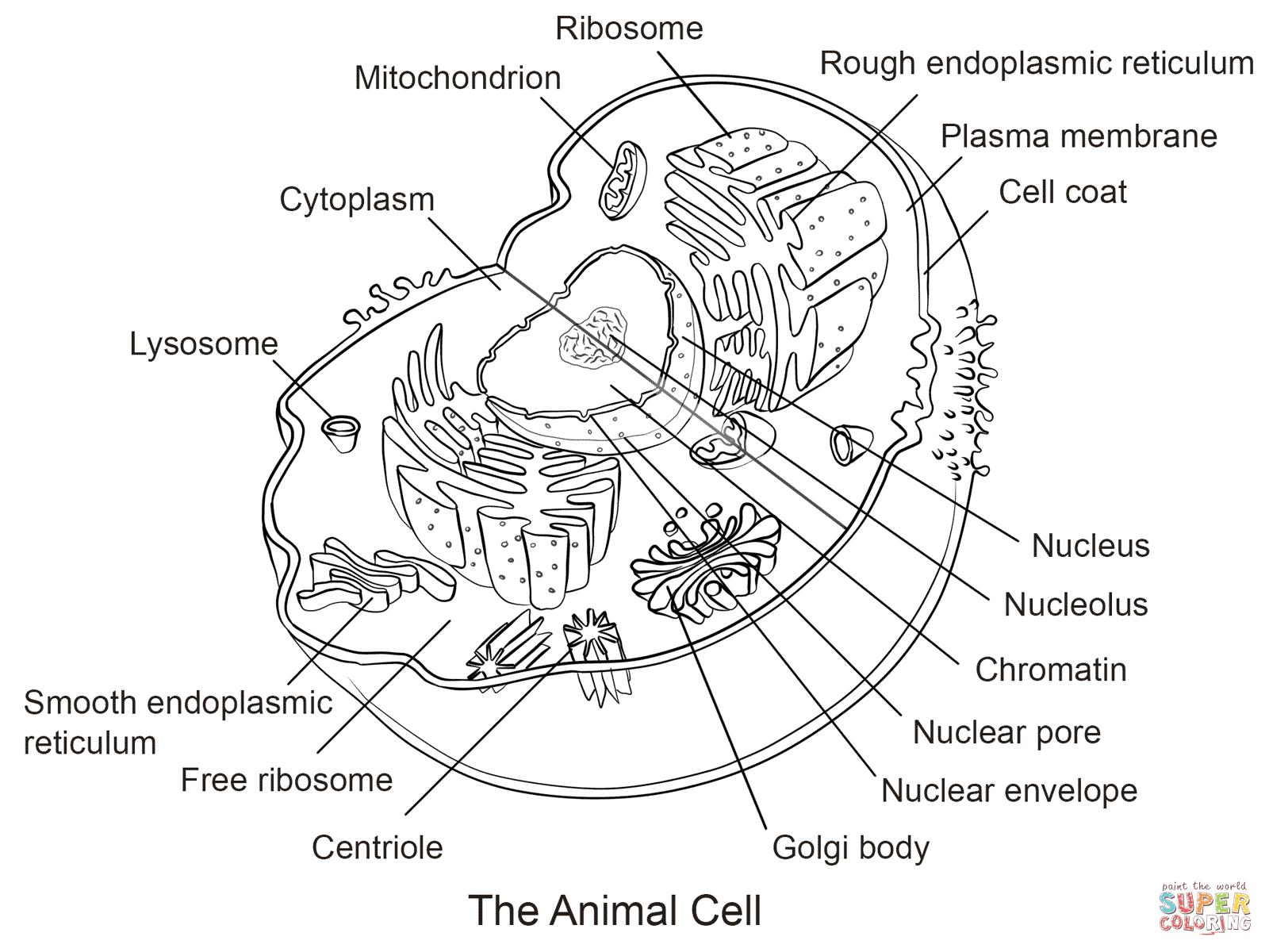 worksheet Animal And Plant Cells Worksheet pictures animal cell worksheet pigmu worksheets for school pigmu