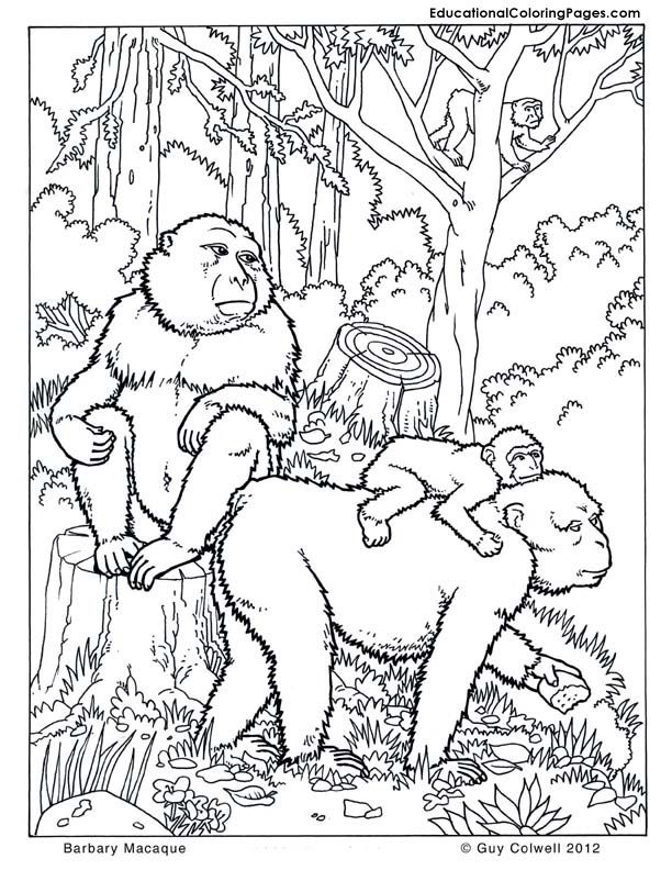 Nature Coloring Pictures  Coloring Home