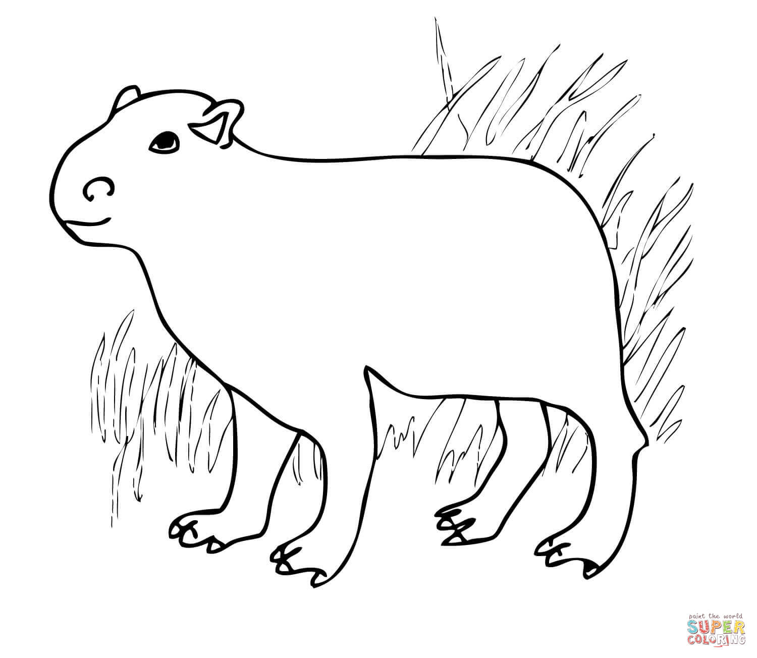 Capybara from South America coloring page | Free Printable ...