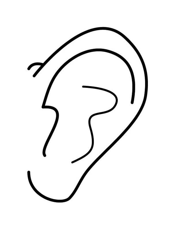 coloring pages of ears - photo#5