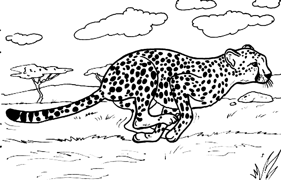 baby cheetah coloring pages - photo#27