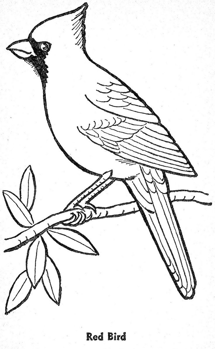 Bird Patterns To Trace AZ Coloring Pages