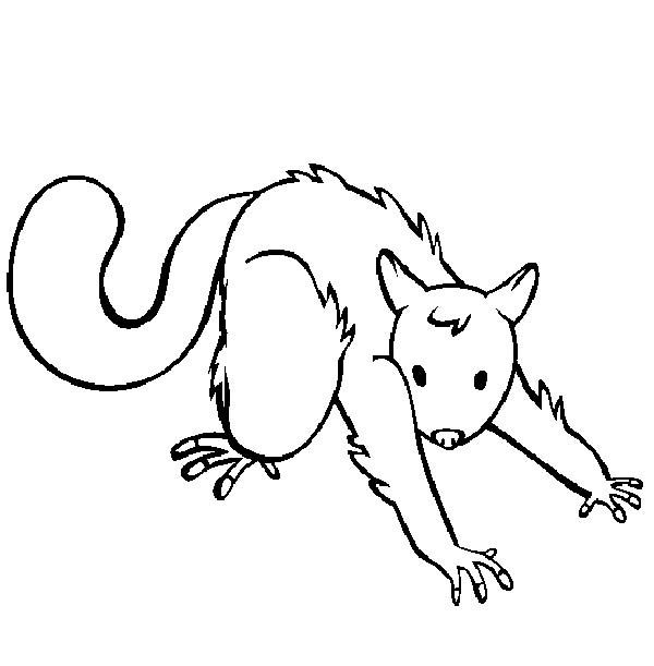 possum coloring pages for kids-#27