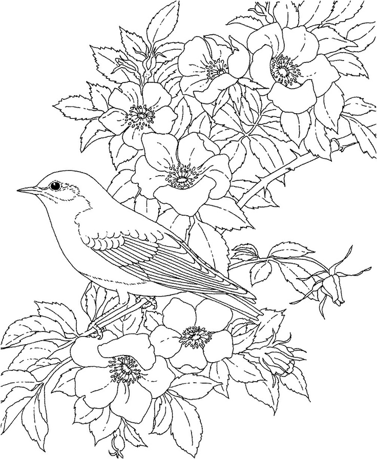 Blue Bird Coloring Pages Az Coloring Pages Blue Bird Coloring Pages