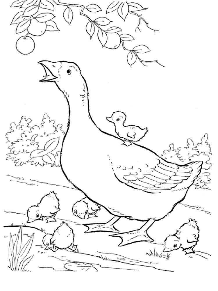 Goose Coloring Pages Download And Print