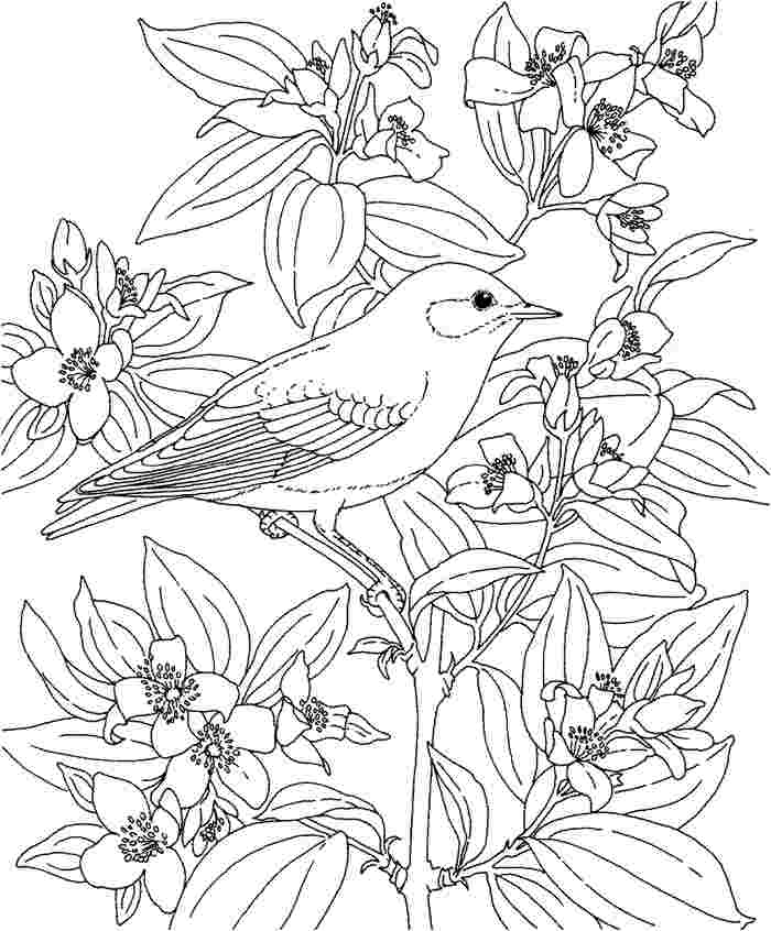 Ohio State Flower Coloring Page