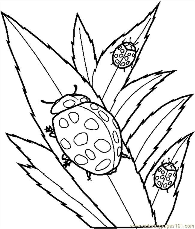 Bugs Coloring Pages Young Children - Free Printable Coloring Pages