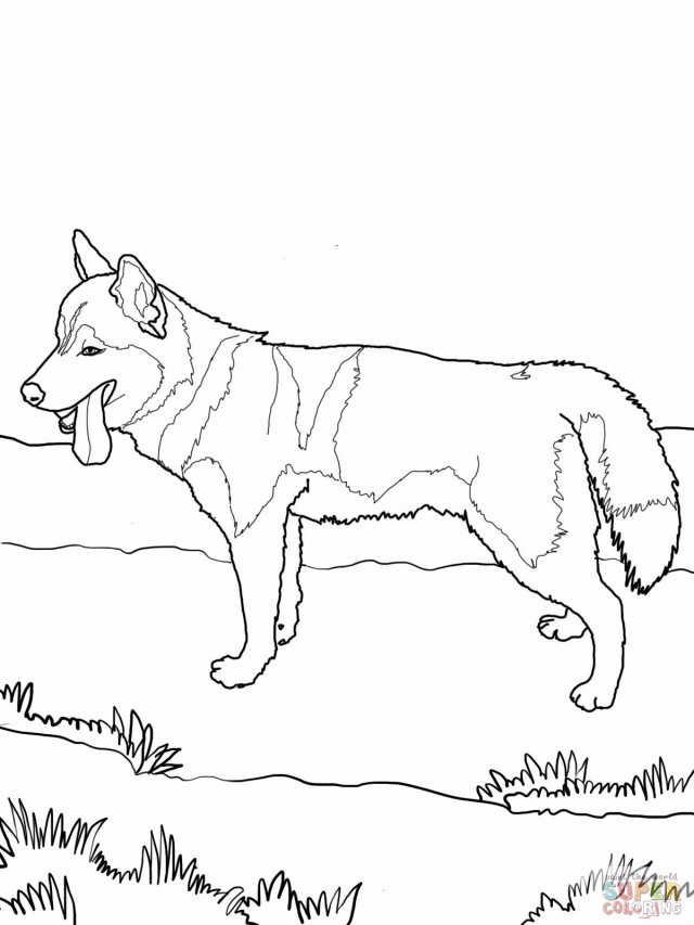 husky coloring pages - alaskan husky coloring pages