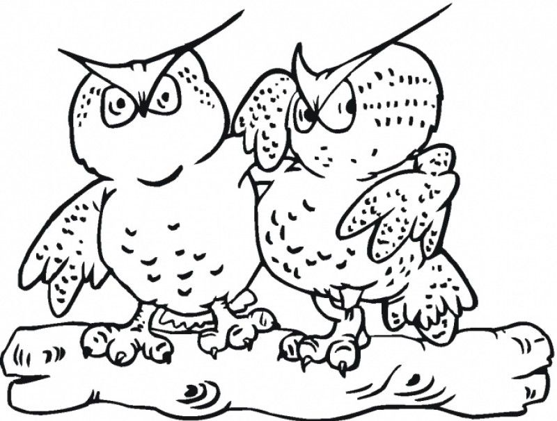 Great Horned Owl Coloring Page - Coloring Home