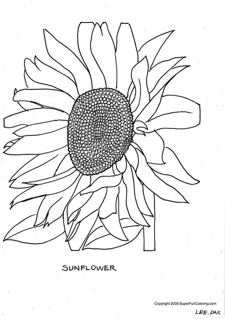 sunflower coloring pages bing images coloring book pages pinter