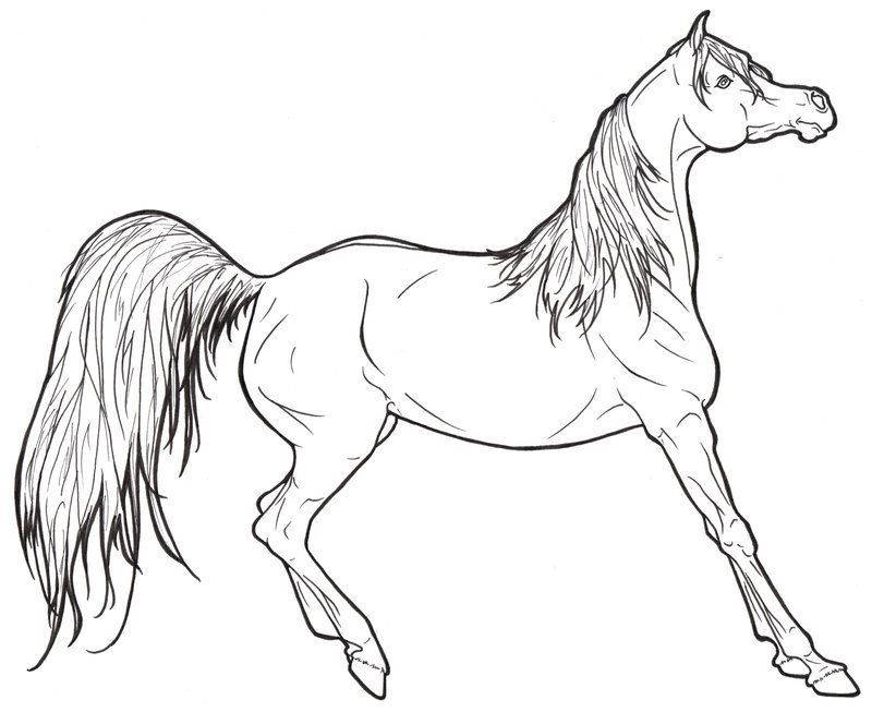 Realistic Horse Coloring Pages To Print  Coloring Home