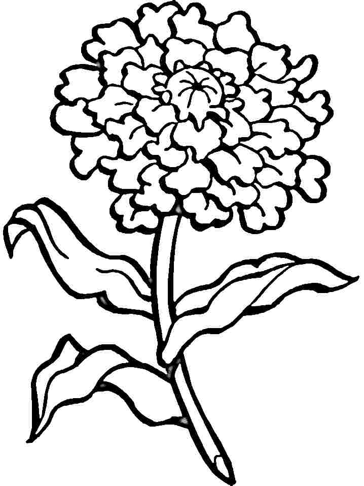 carnation coloring pages - photo#5