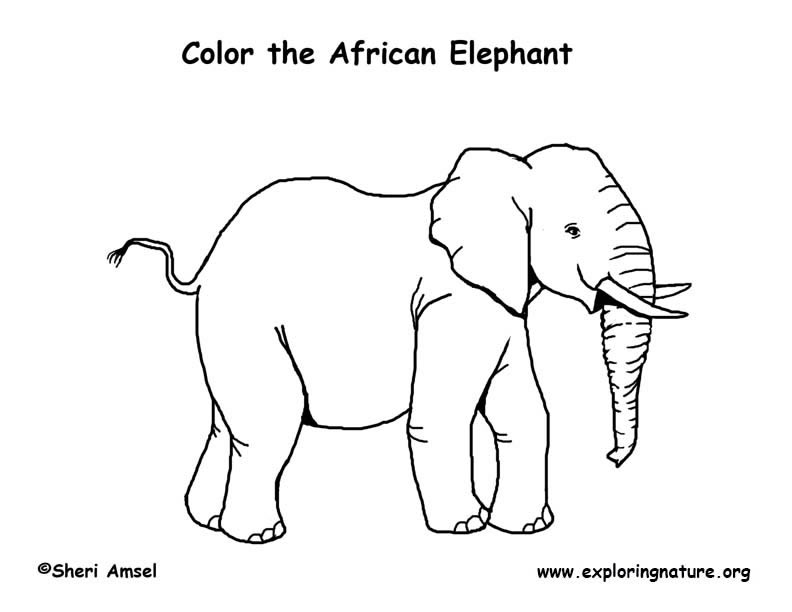 Coloring Pages Of African Animals