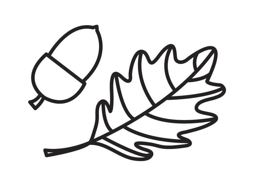 Acorn Arms Colouring In