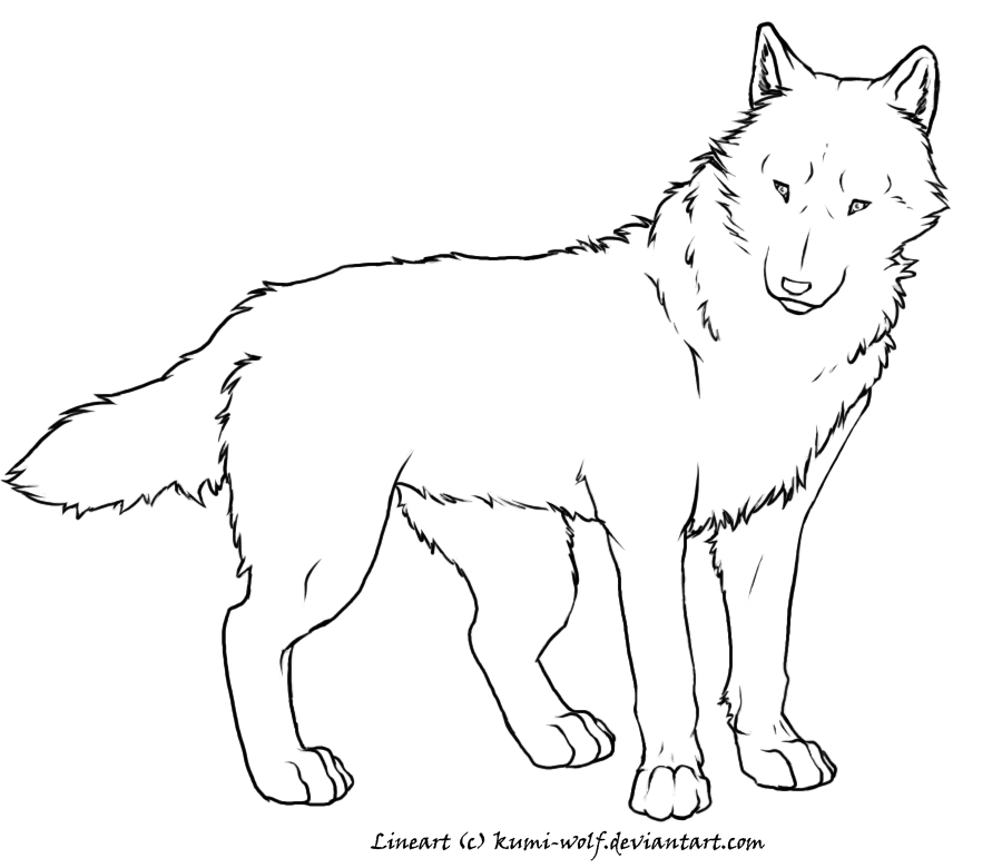 free lineart adult wolf by stepandy on deviantart