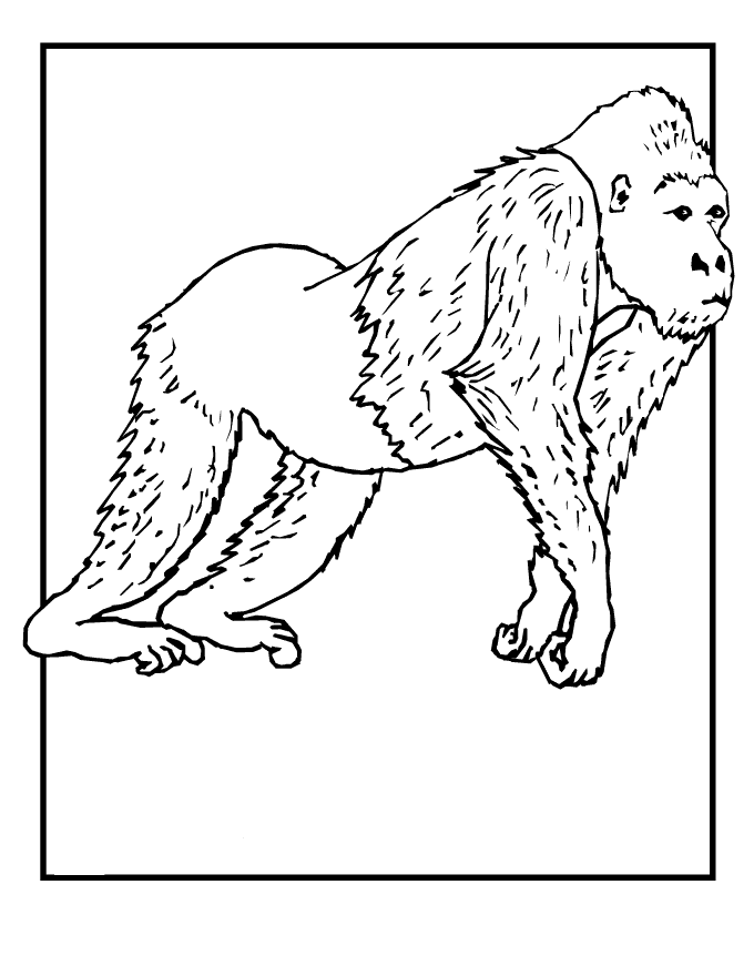 Wild Animals Coloring Pages Free Printable Download | Coloring