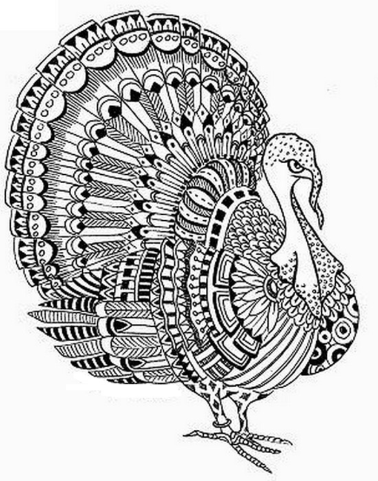 Turkey Thanksgiving Coloring Page For Adults