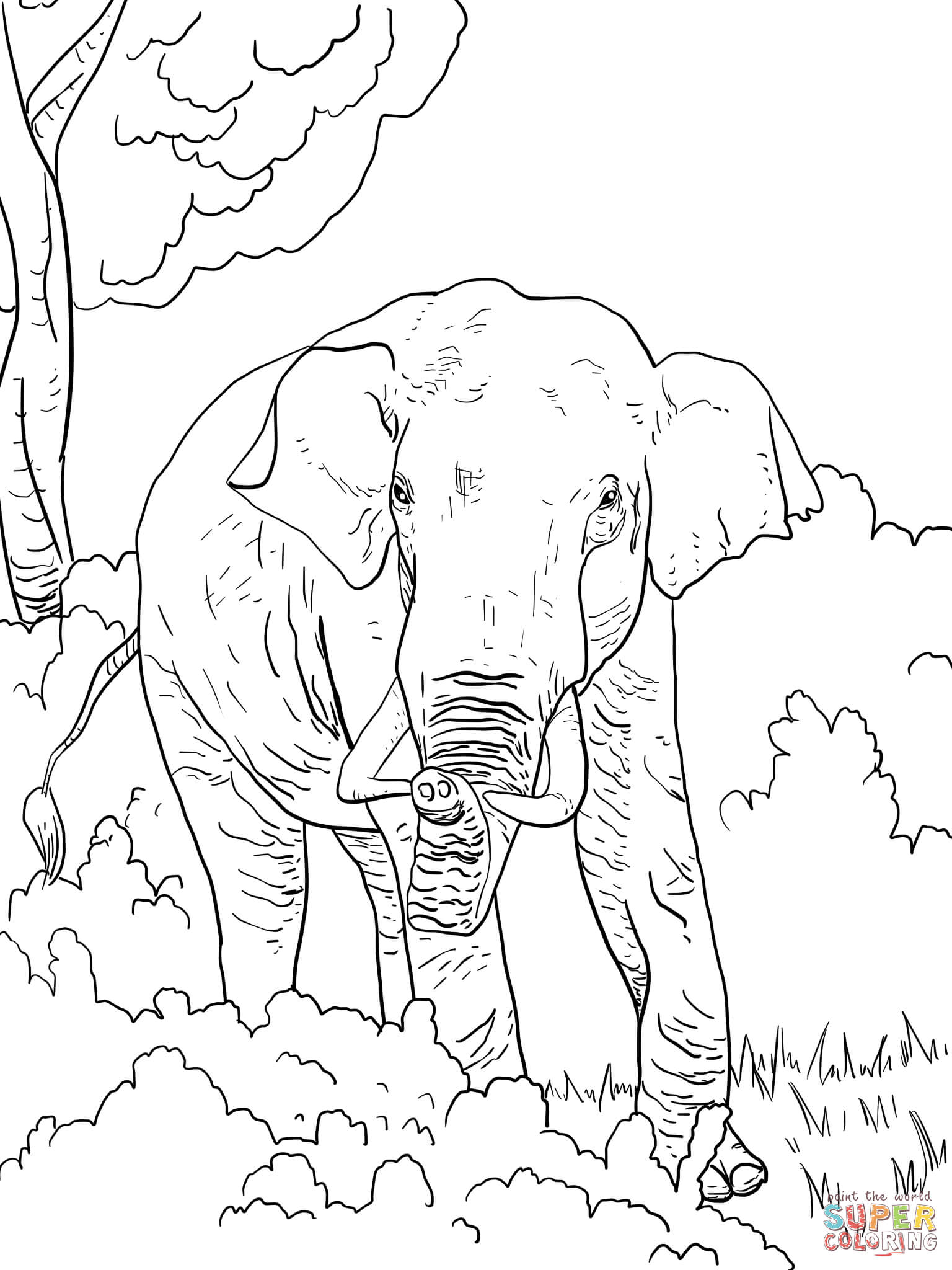 Indian Elephant Coloring Page | Free Printable Coloring Pages ...