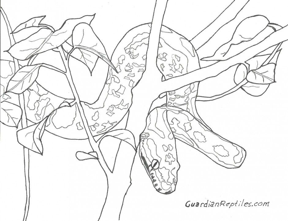 python coloring pages - photo#26