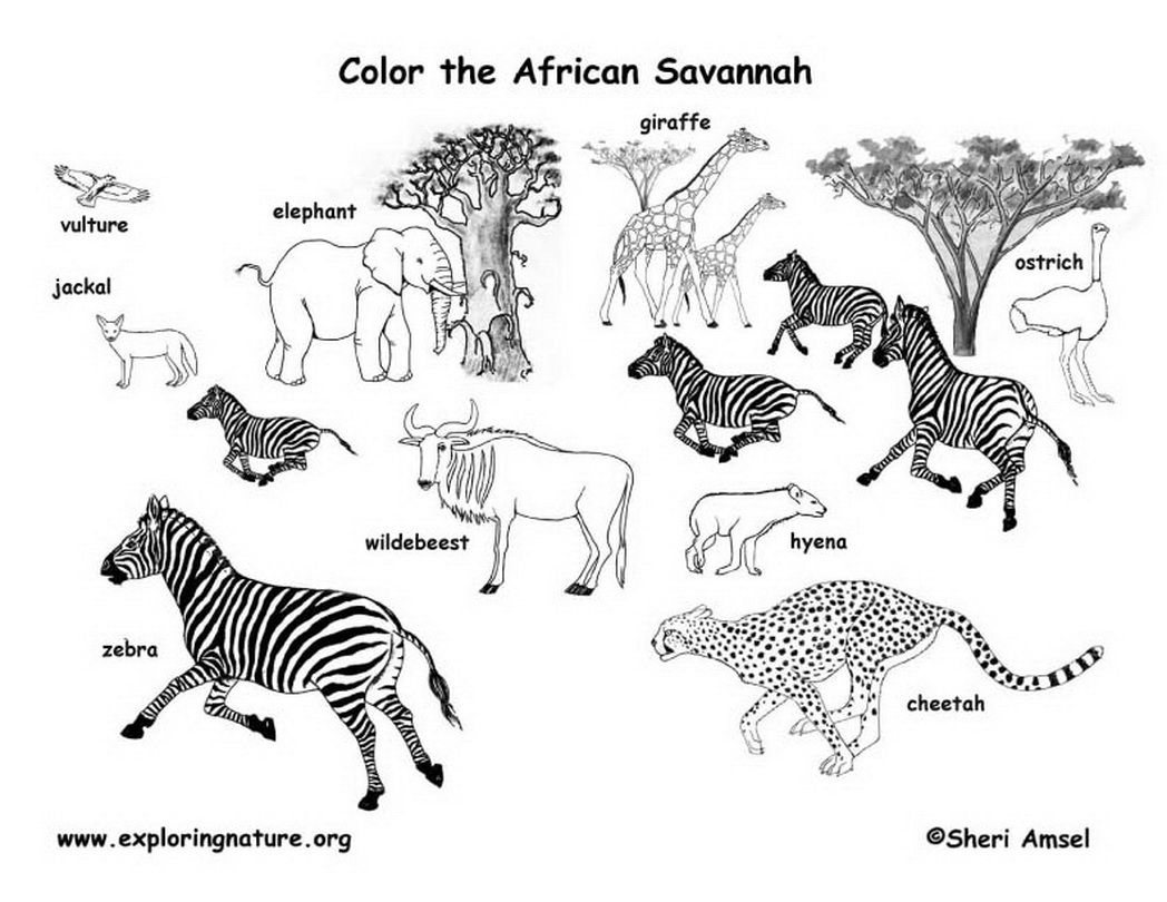African Animals Coloring Pages Image Gallery HCPR