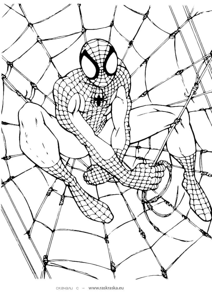 Free coloring pages for spiderman - Spiderman Free Printable Coloring Pages Free Coloring Pages