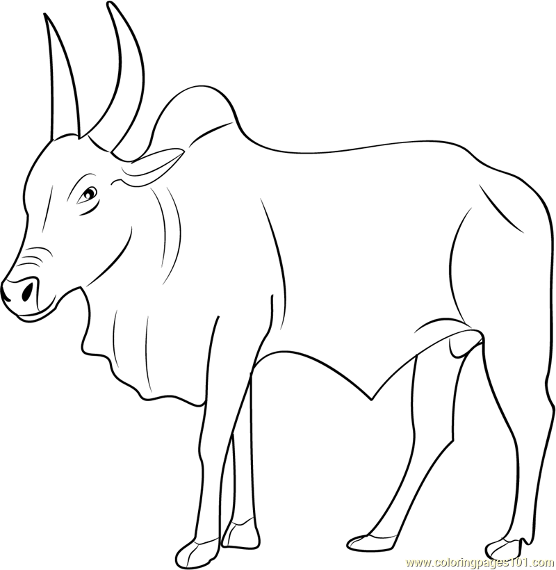 Bull Printable Coloring Pages - Coloring Home