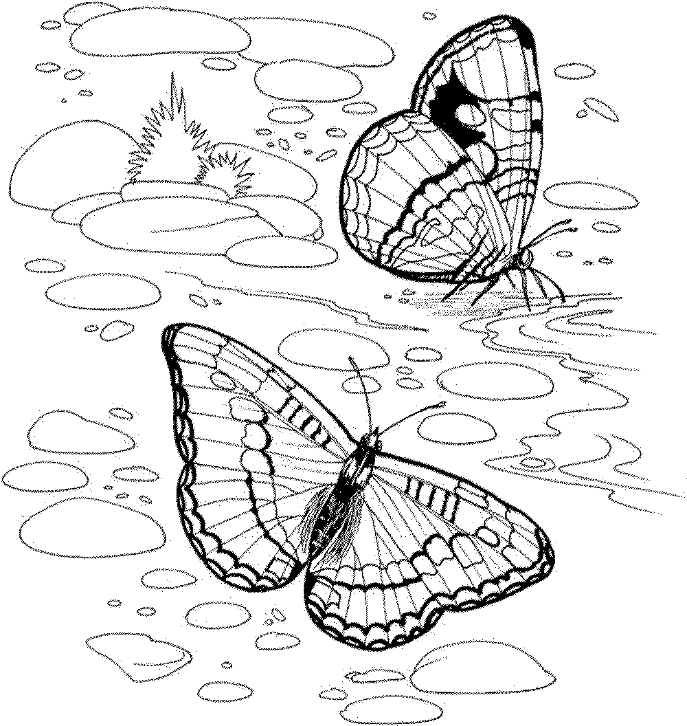 Colouring Pages Nature Free Coloring Pages On Masivy World Coloring Home