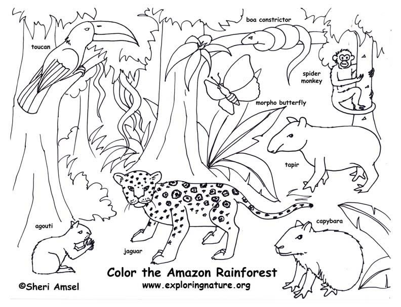 Free Printable Rainforest Coloring Pages Coloring Home