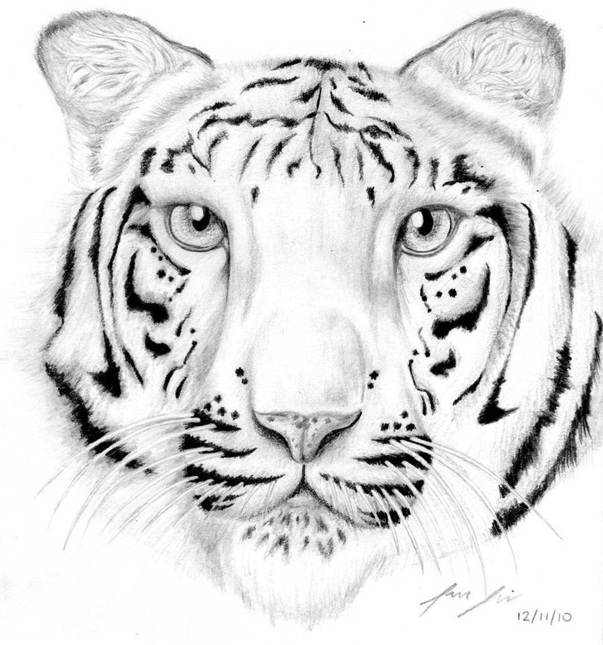 Coloring Pictures Of White Tigers - High Quality Coloring Pages