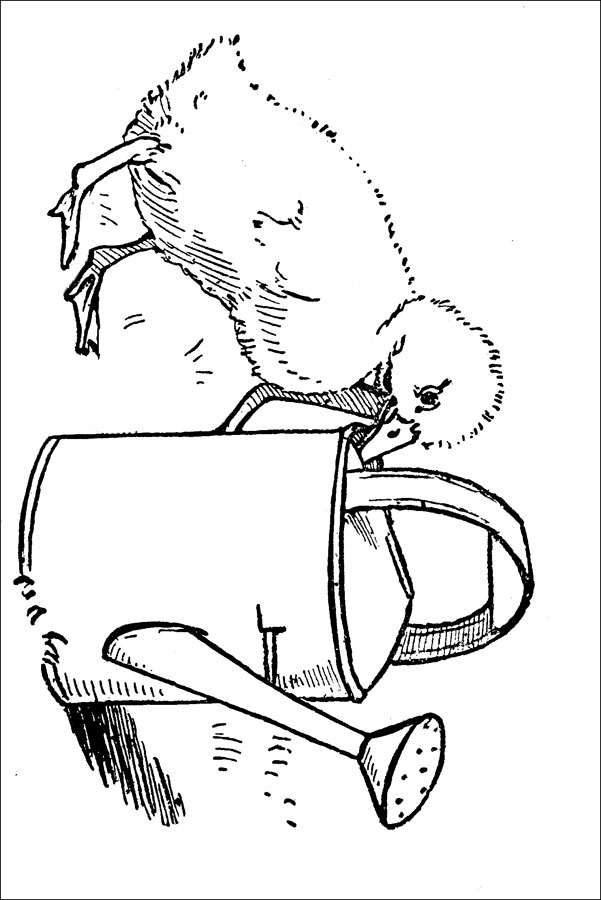 ugly duckling coloring page - photo #29