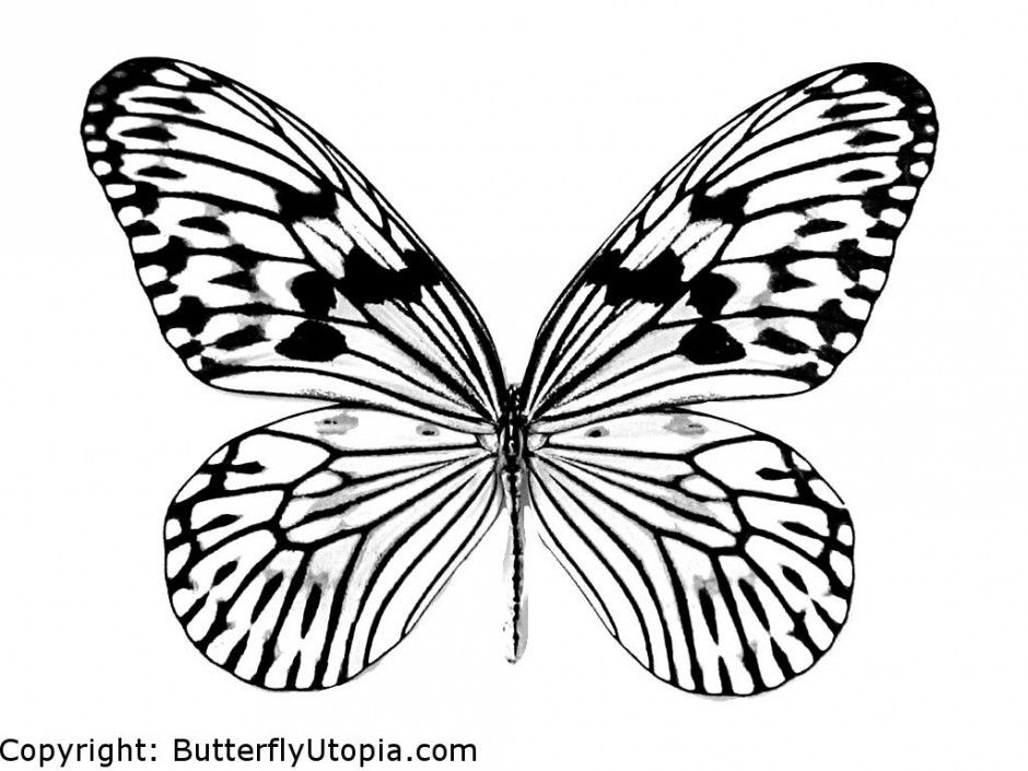 Butterfly designs to color - photo#21