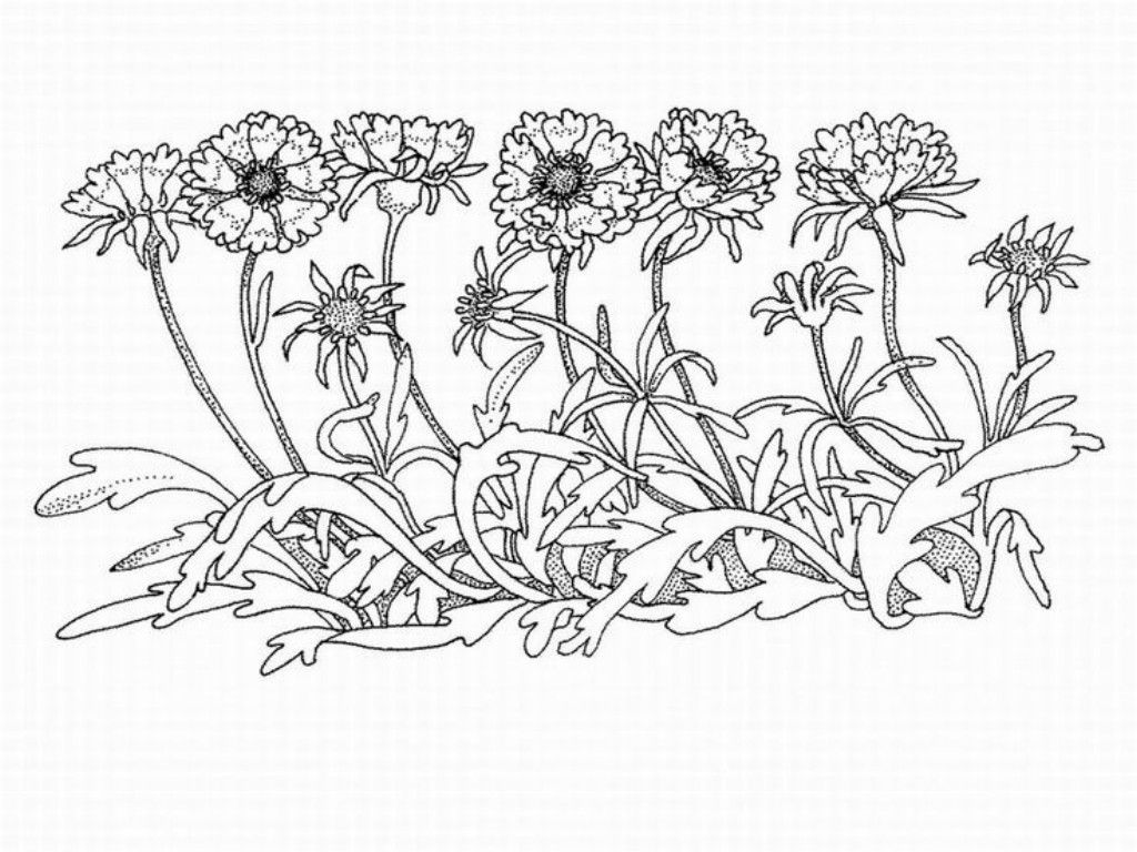 Advanced To Print - Coloring Pages for Kids and for Adults