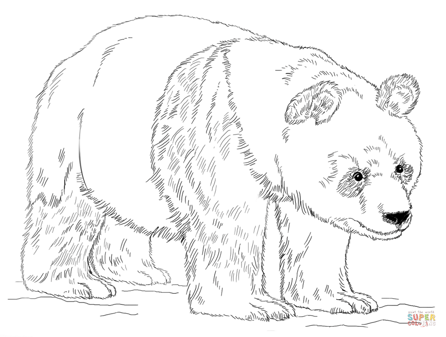 Baby Pandas Coloring Pages AZ
