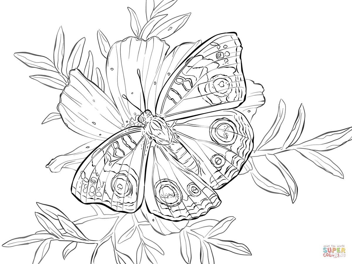 Butterfly On A Flower Coloring Page - Coloring Home