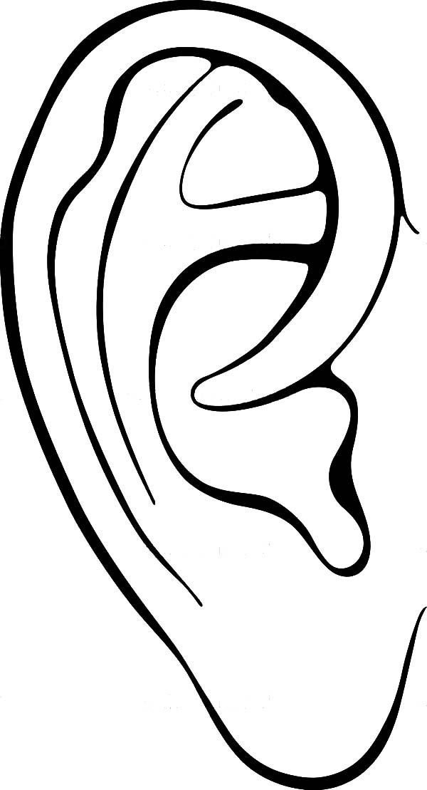 coloring pages of ears - photo#15