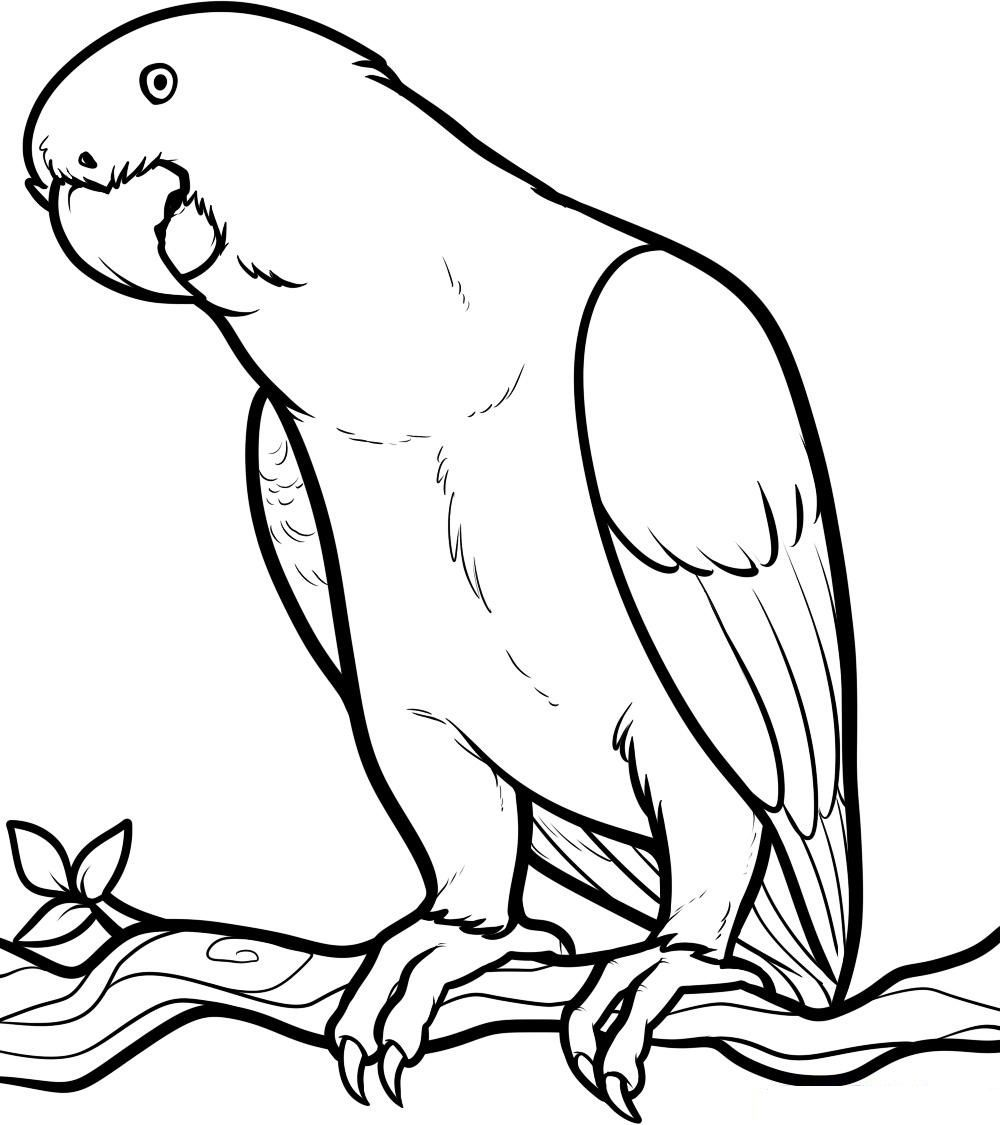 Free Printable Parrot Coloring Pages For Kids Coloring Home