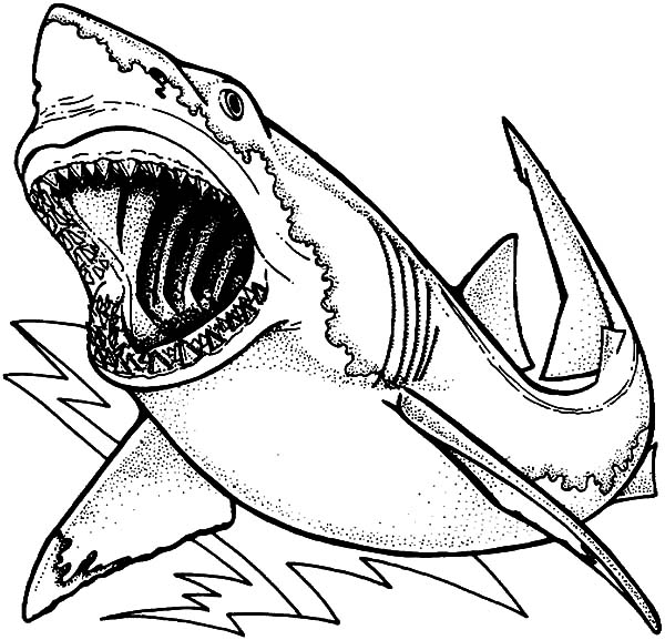 Drawing Jaws Coloring Pages : Best Place to Color
