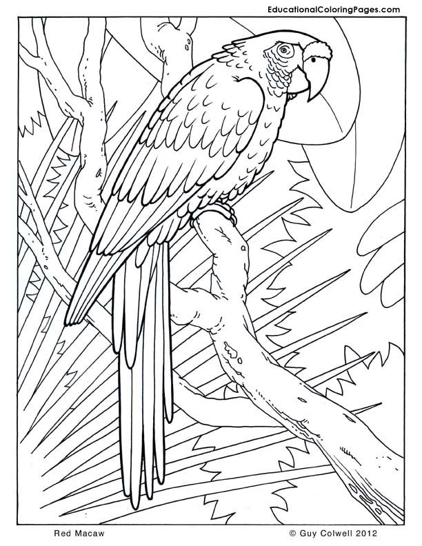 safari animals coloring pages - photo#34