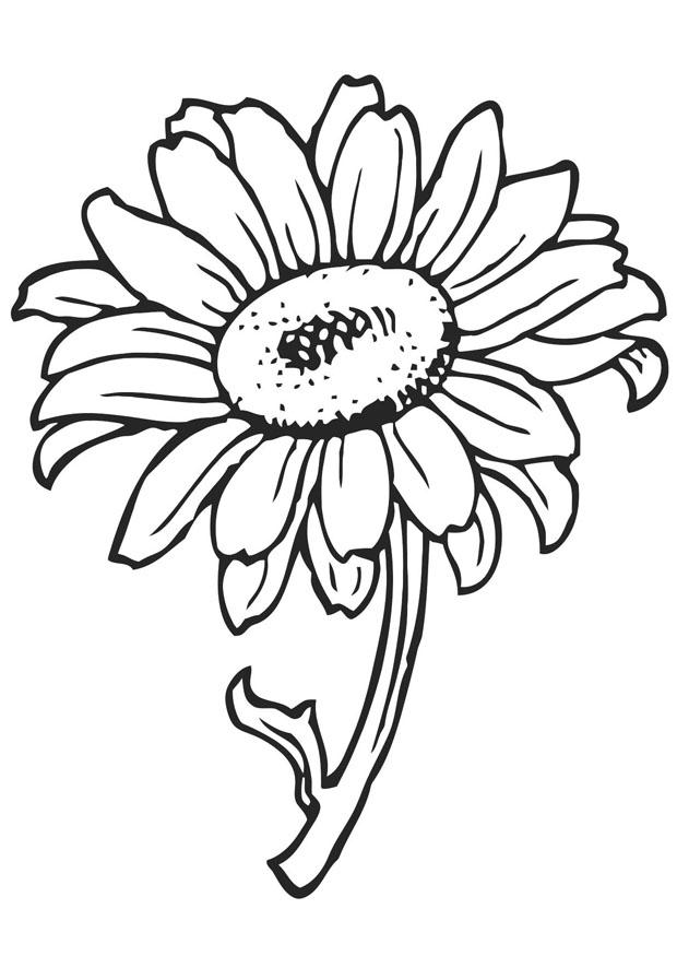 Coloring page sunflower - img 21202.