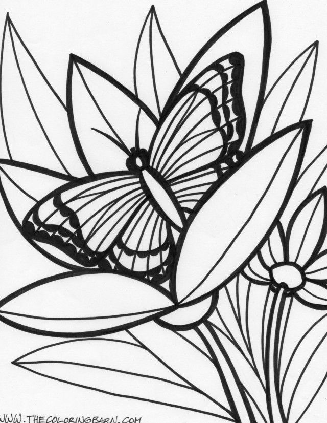 Jungle Coloring Pages Of Animals Rainforest