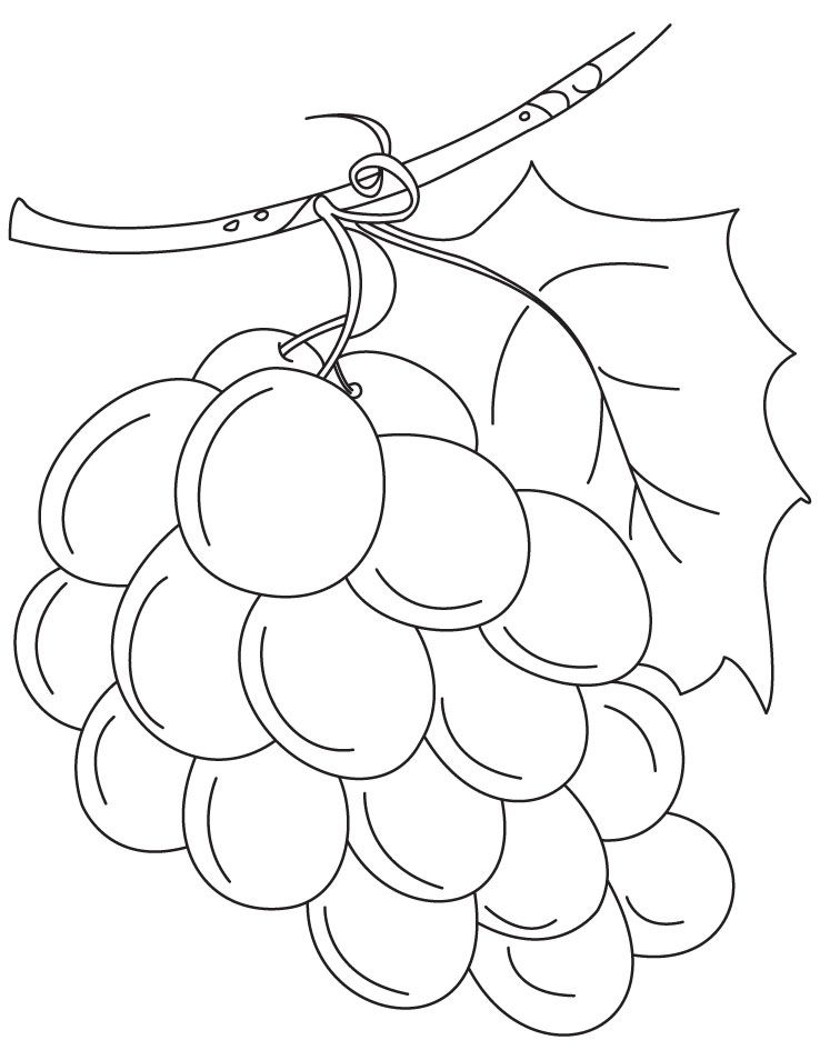 Grapes Coloring Page Coloring