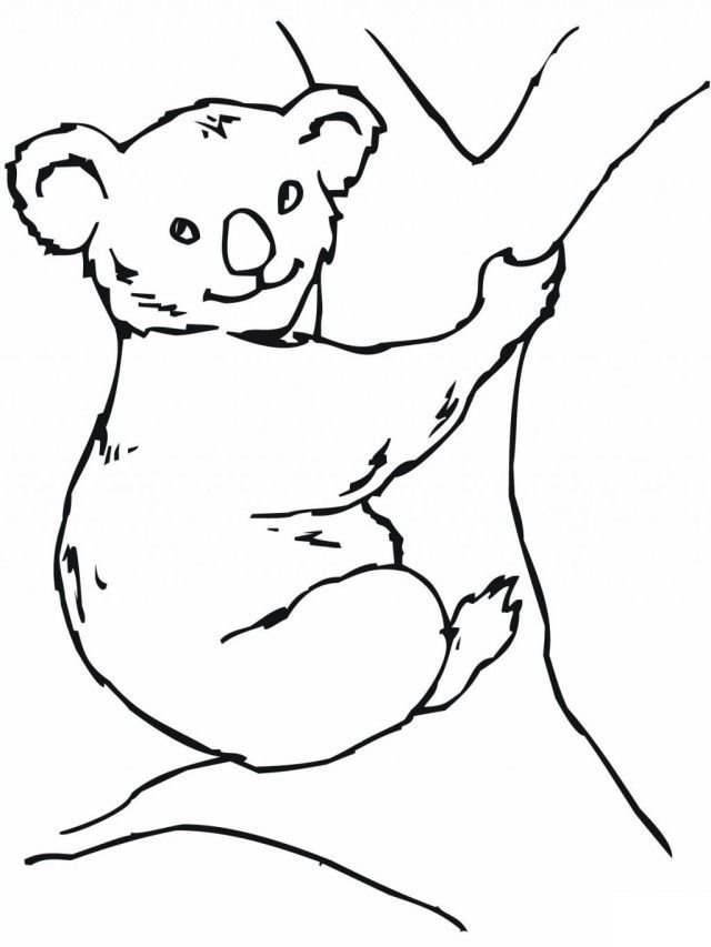 Funny Koala Bear Coloring Pages For Kids | Laptopezine.