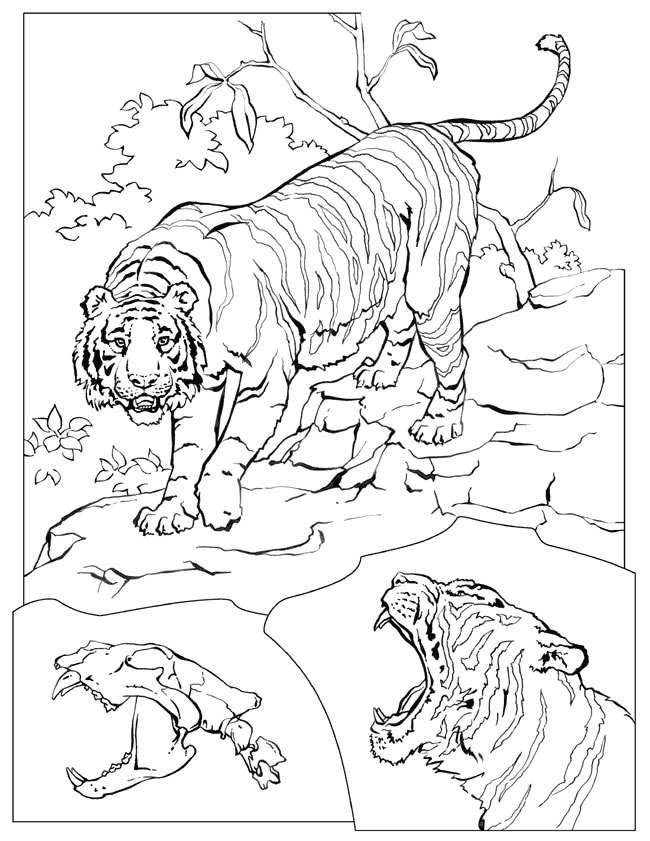 Lion Coloring Pages Pdf : Lions tigers coloring pages free printable download