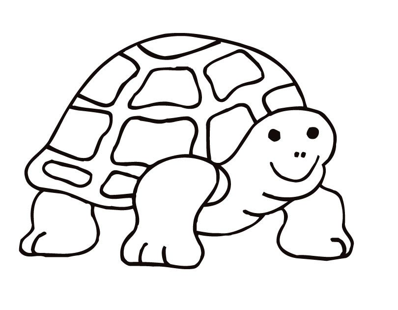 Coloring Pages Tortoise Coloring Home