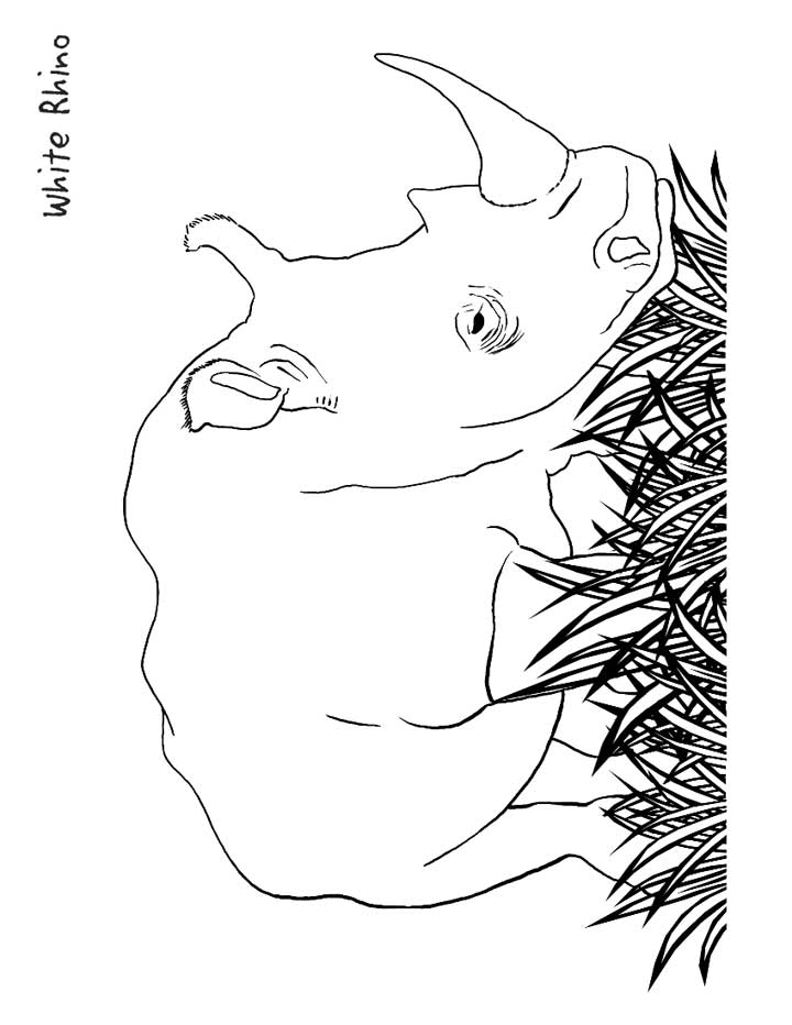 rhinoceros coloring page for kids free printable picture
