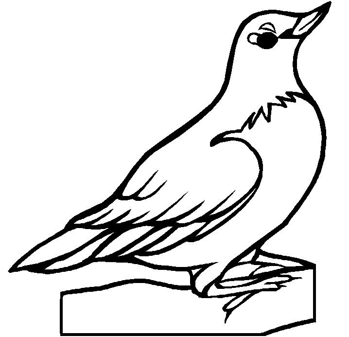 Wyoming State Tree Coloring Page
